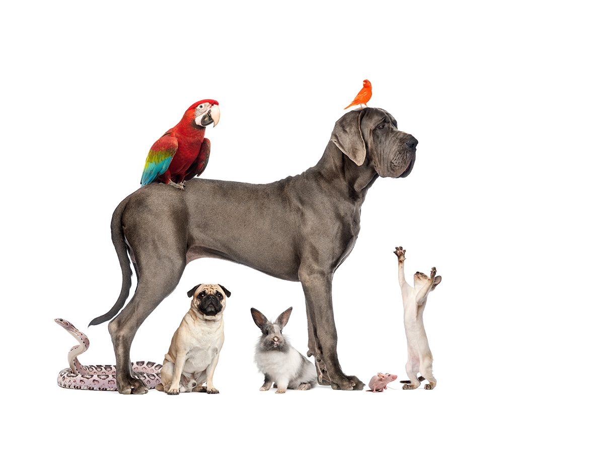 dogs-cats-birds-and-bunnies-one-house-fb-167580013_0